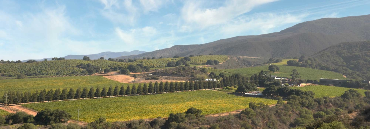 panoramic view of Santa Lucia Highlands