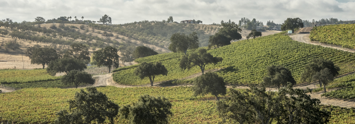 Positive on Paso: Why you should be looking at Paso Robles for Cabernet Sauvignon